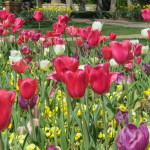 DALLAS ARBORETUM – ONE OF THE MOST BEAUTIFUL IN THE WORLD!