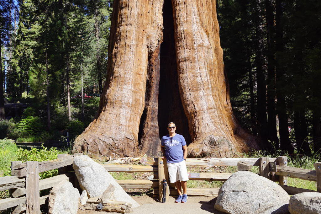 Sentinel in Big Trees Trail - Things to do in Sequoia National Park