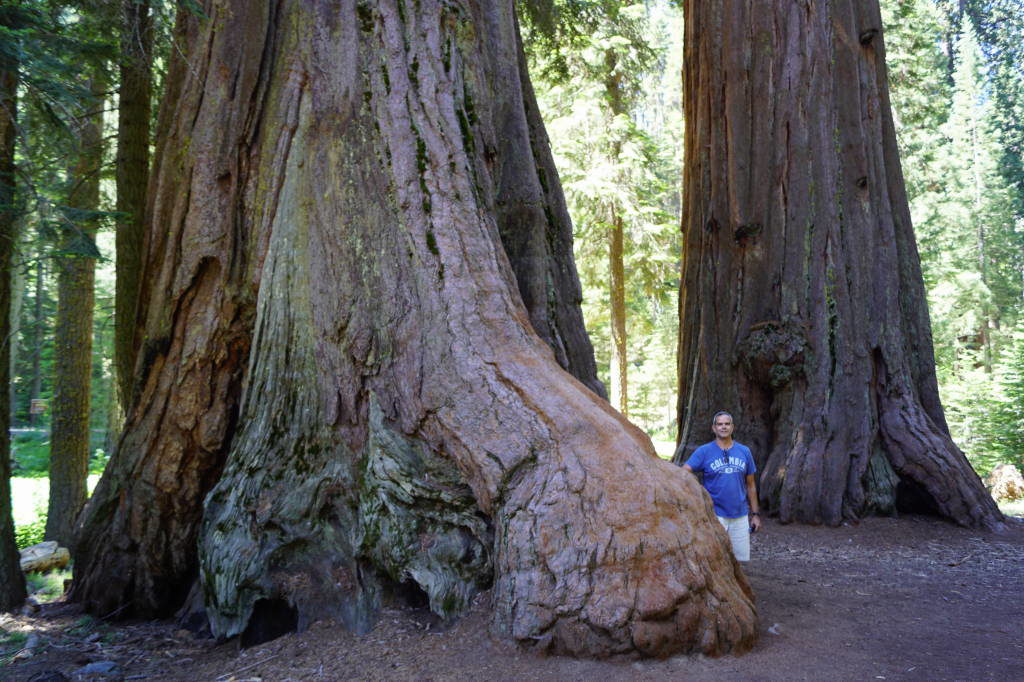 Congress Trail - Things to do in Sequoia National Park