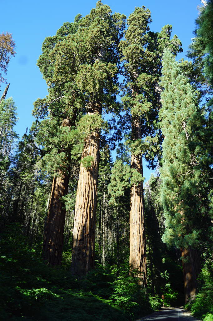 The 3 Guardians seen from the car - Things to do in Sequoia National Park