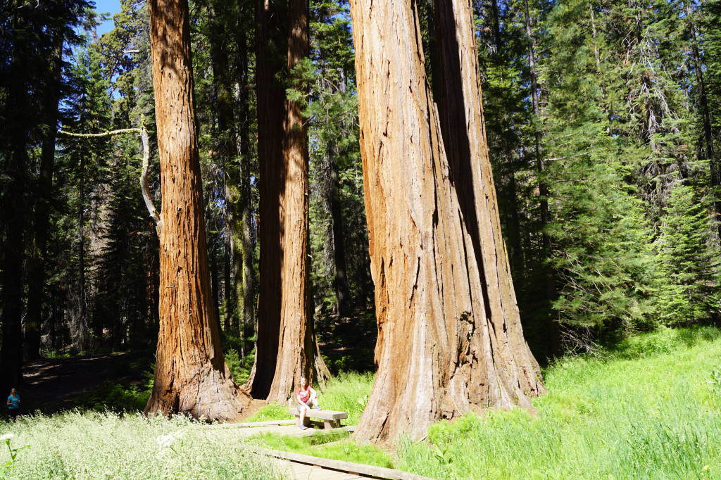 Big Trees Trail - Things to do in Sequoia National Park