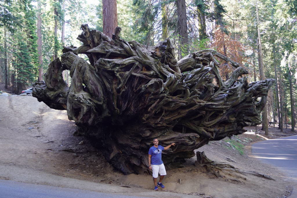 Road to Tunnel Log - Things to do in Sequoia National Park