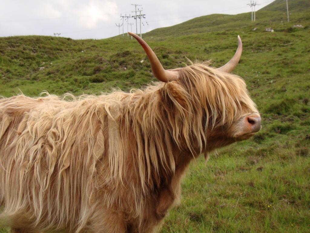 Ilha de Skye - Highlands Escócia