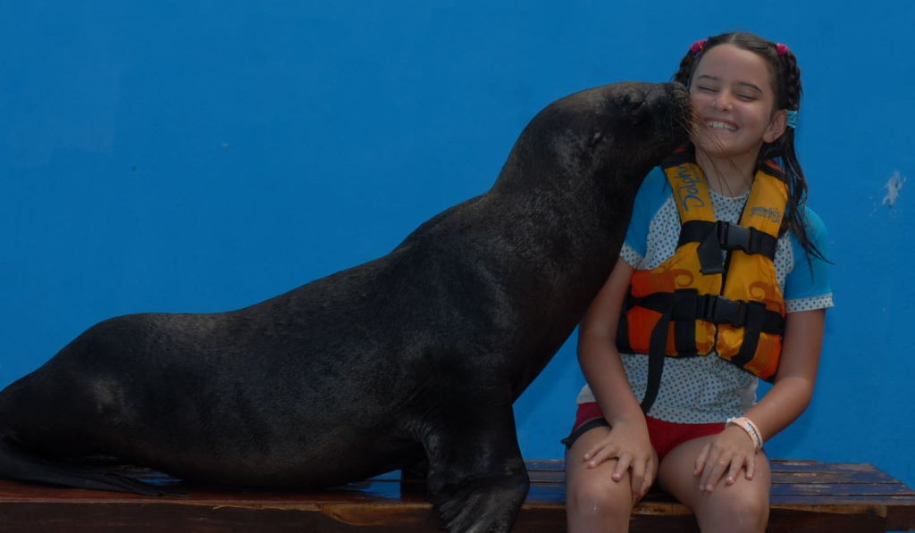 Leão marinho em Isla Mujeres - Riviera Maia e Isla Mujeres México