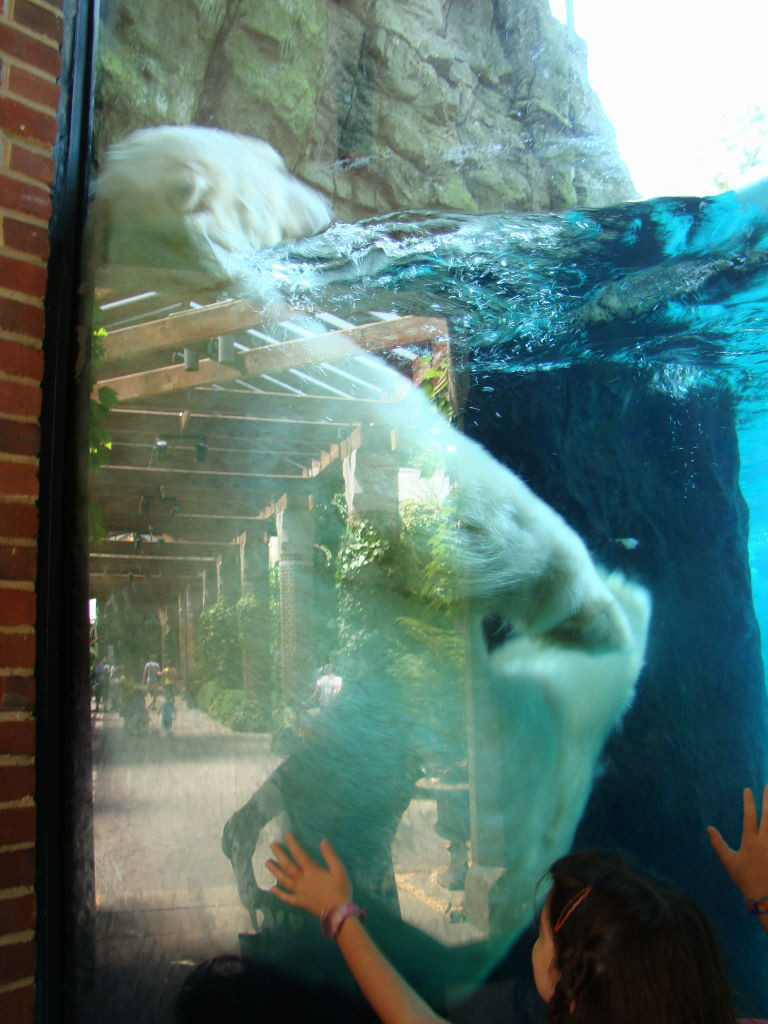 Zoológico - Parque em Nova York? Central Park!