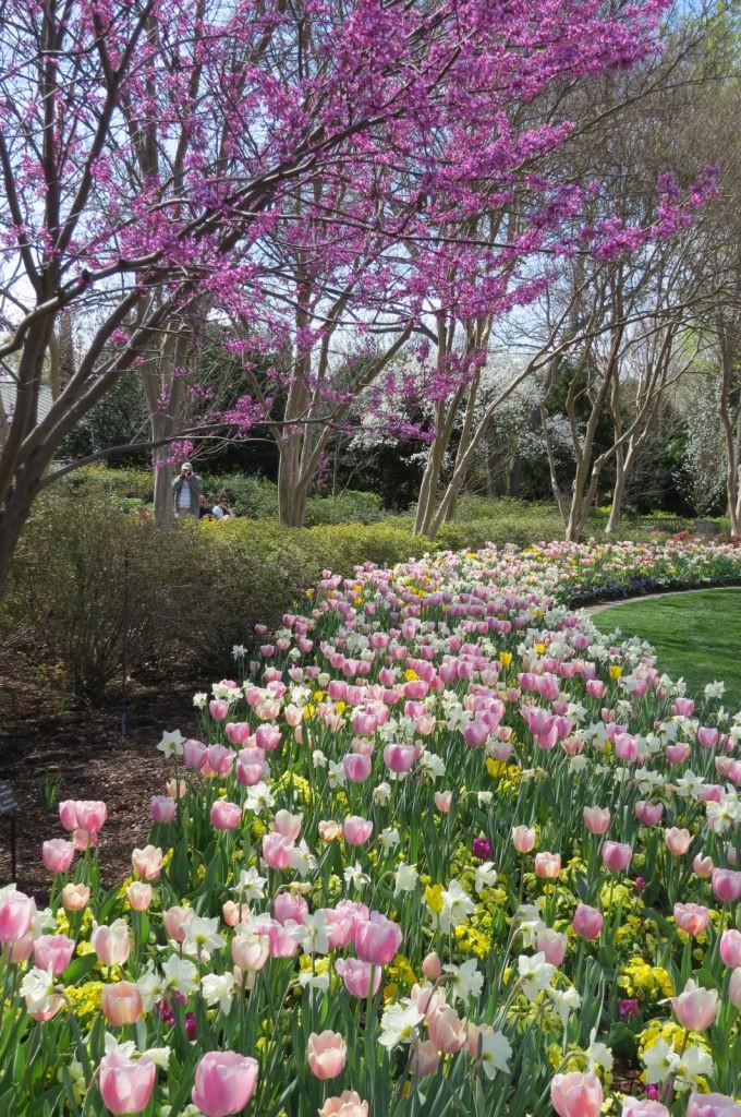 Johnson Color Garden  - O que fazer em Dallas? Jardim Botânico!