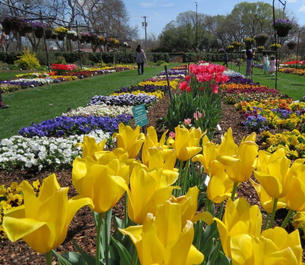 Hunt Paseo de Flores - O que fazer em Dallas? Jardim Botânico!