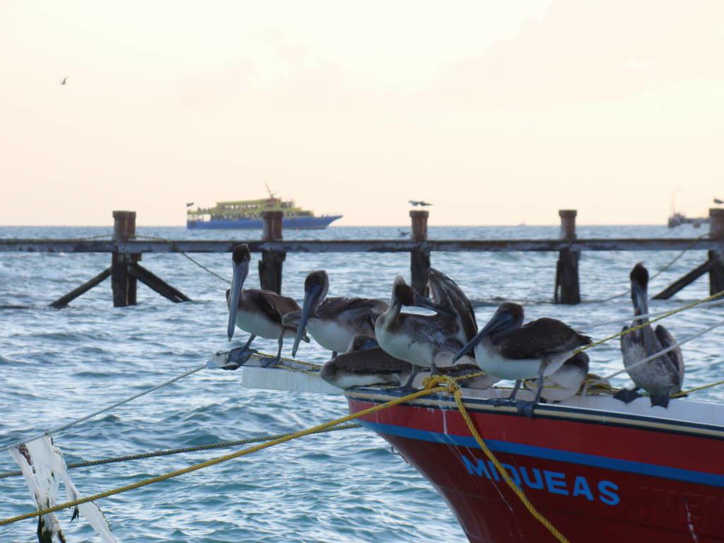 Playa del Carmen - Riviera Maia e Isla Mujeres México