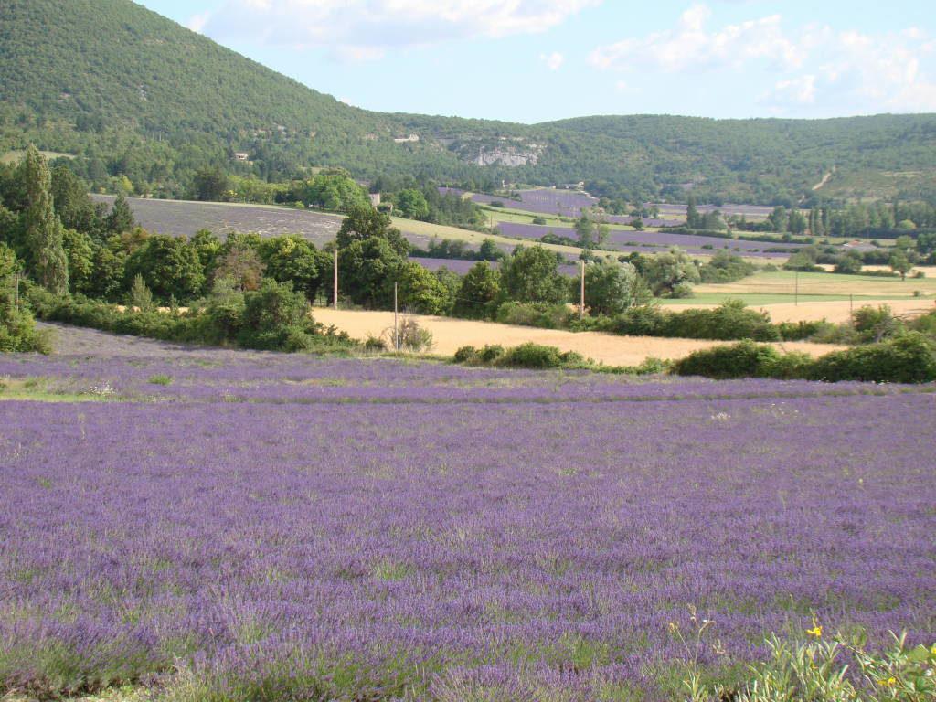Luberon - Campos de lavanda na Provença