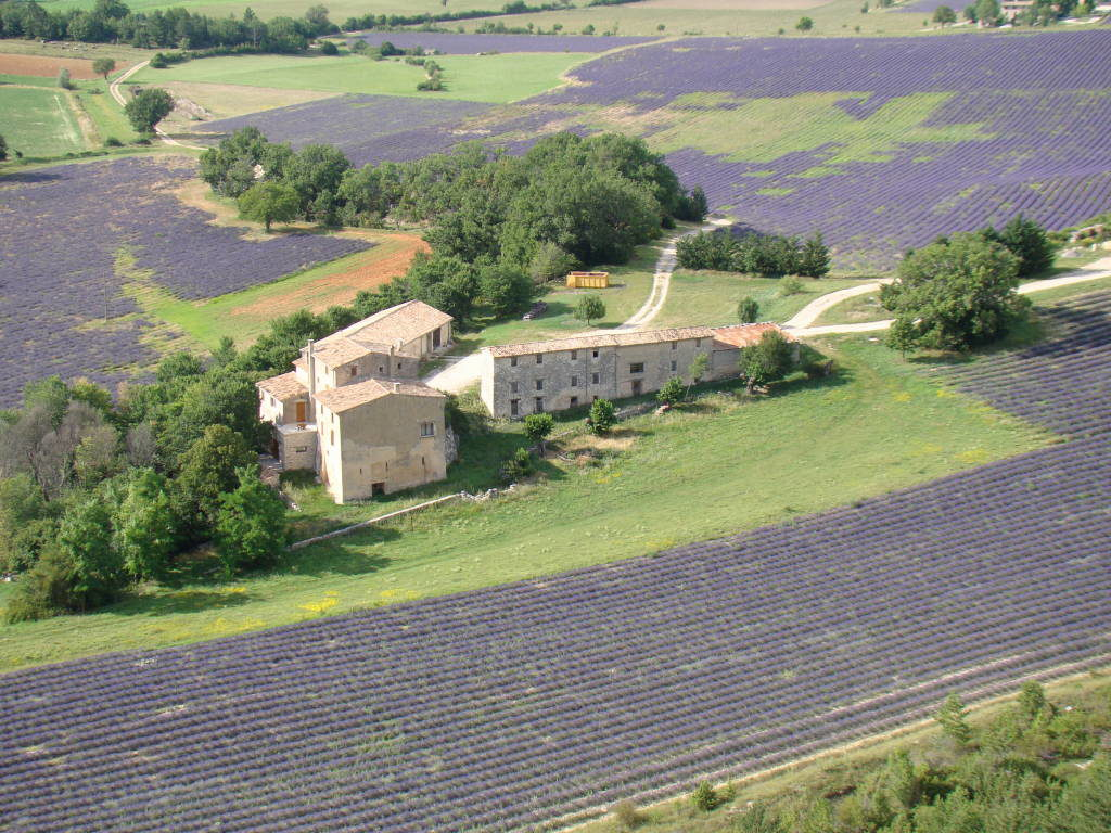 Sault -Campos de lavanda na Provença