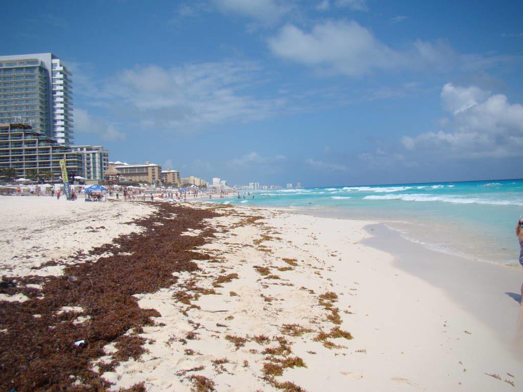 Algas no inverno - O que fazer em Cancun México