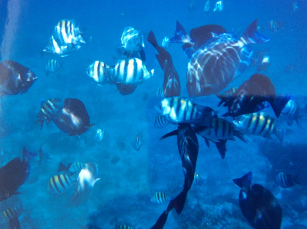Cozumel - Riviera Maia e Isla Mujeres México