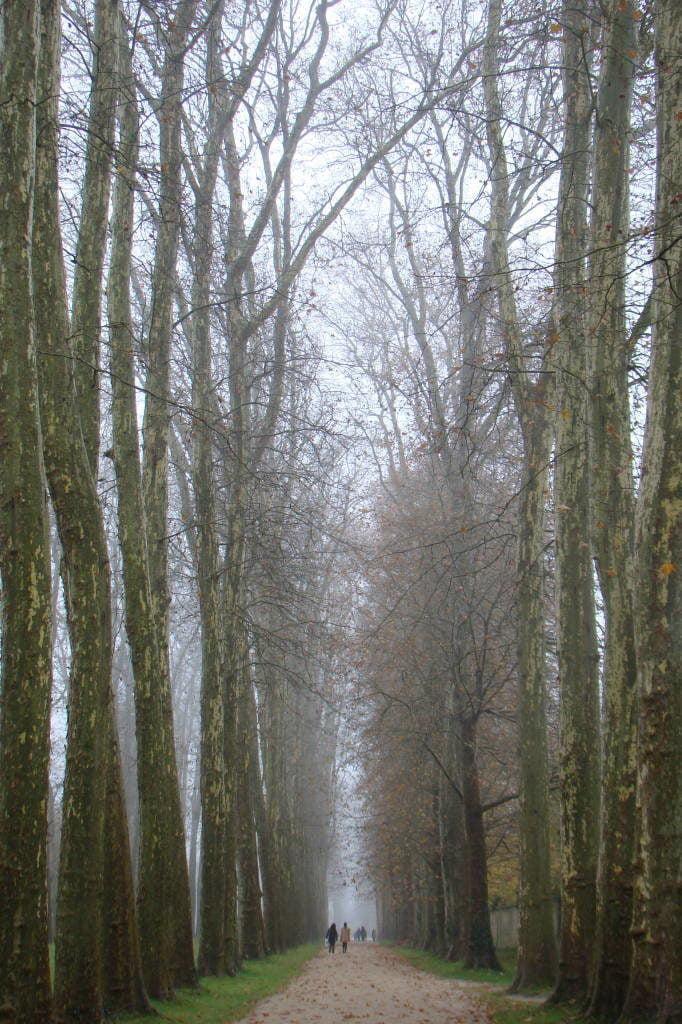 O parque no inverno - O Palácio de Versalhes França
