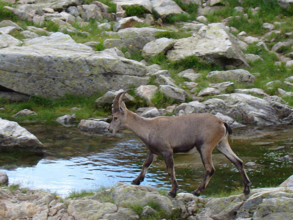 Ida ao Lac Cornu - O que fazer em Chamonix França