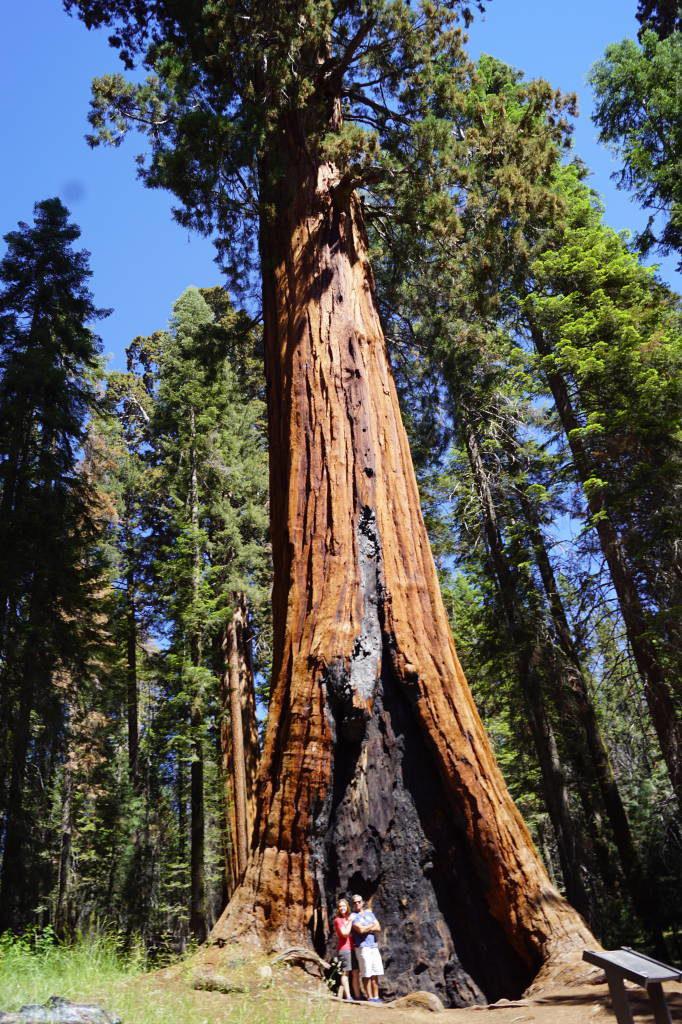 Big Trees Trail - Parque Nacional da Sequoia Califórnia