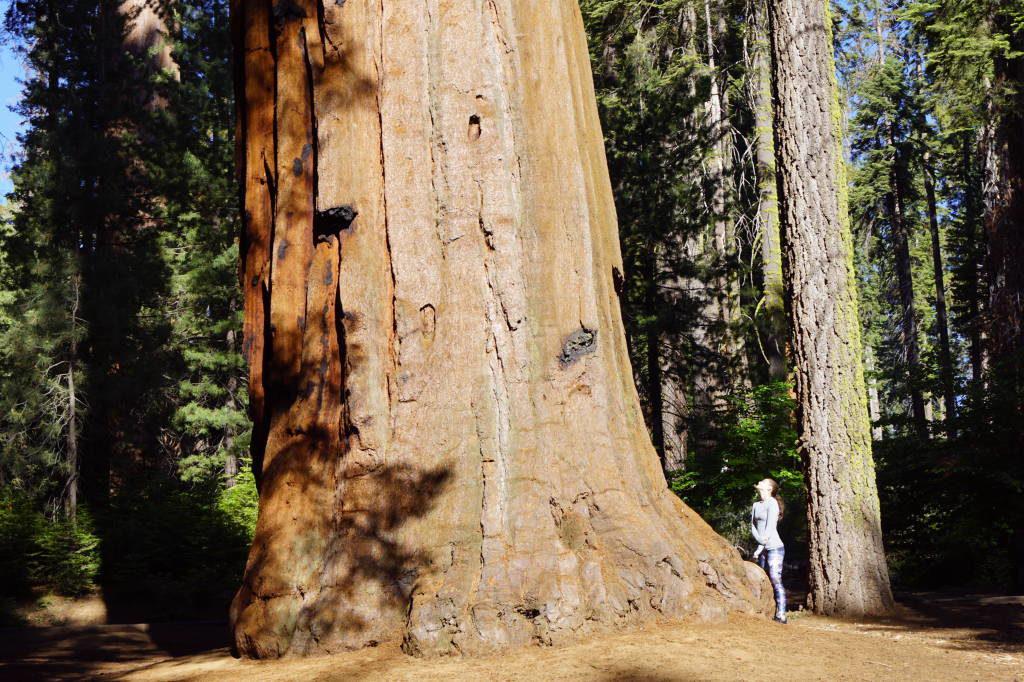 Estrada para o Tunnel Log - Parque Nacional da Sequoia Califórnia