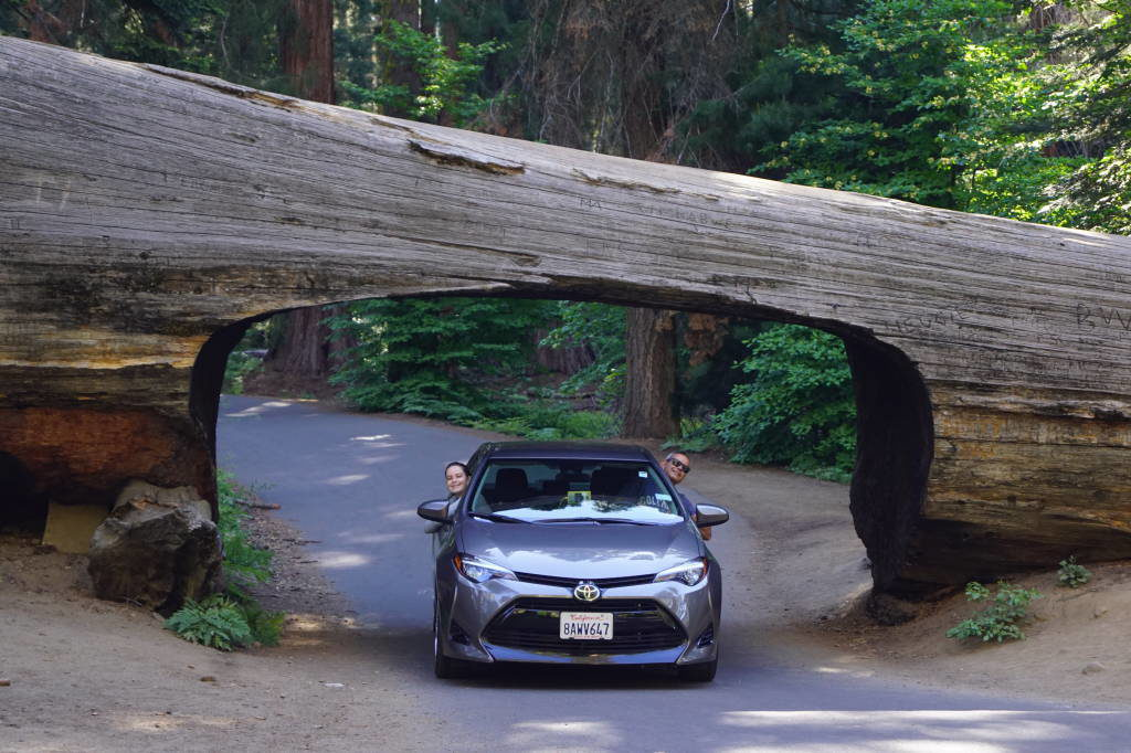 Tunnel Log - Parque Nacional da Sequoia Califórnia