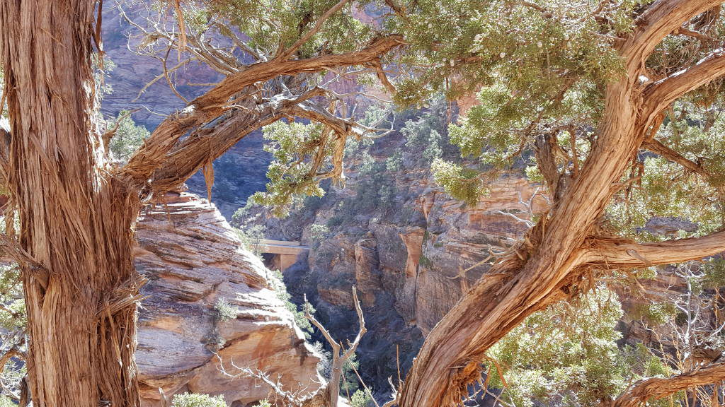Canyon Overlook Trail - Zion National Park Utah EUA