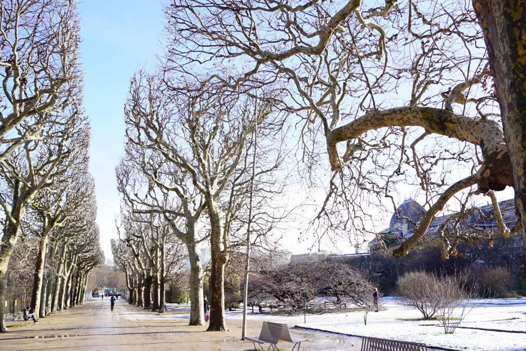 Jardim Botânico - Viajar para Paris no inverno com neve!