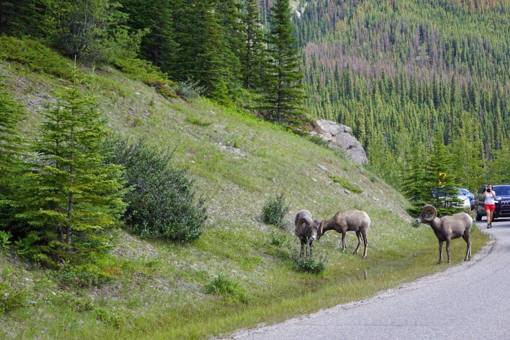 Medicine Lake - O que fazer no Parque Nacional Jasper Canadá