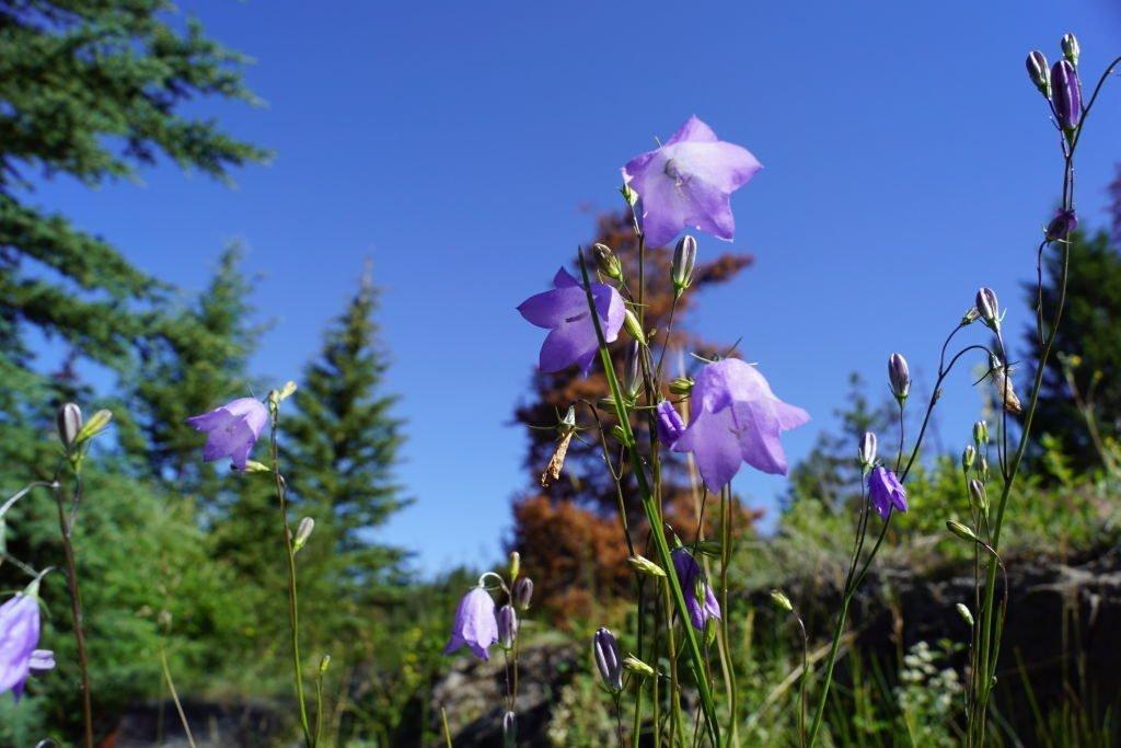 Wabasso Creeck  - Valley of the 5 Lakes Trail - O que fazer no Parque Nacional Jasper Canadá