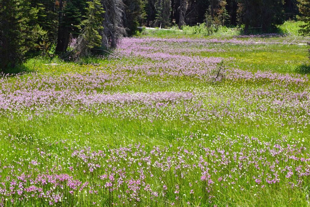 Glaciar Point Road - O que fazer no Parque Nacional Yosemite na Califórnia