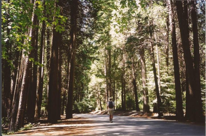 Mirror Lake Trail - O que fazer no Parque Nacional Yosemite na Califórnia
