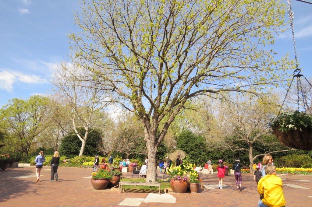 O que fazer em Dallas? Jardim Botânico!