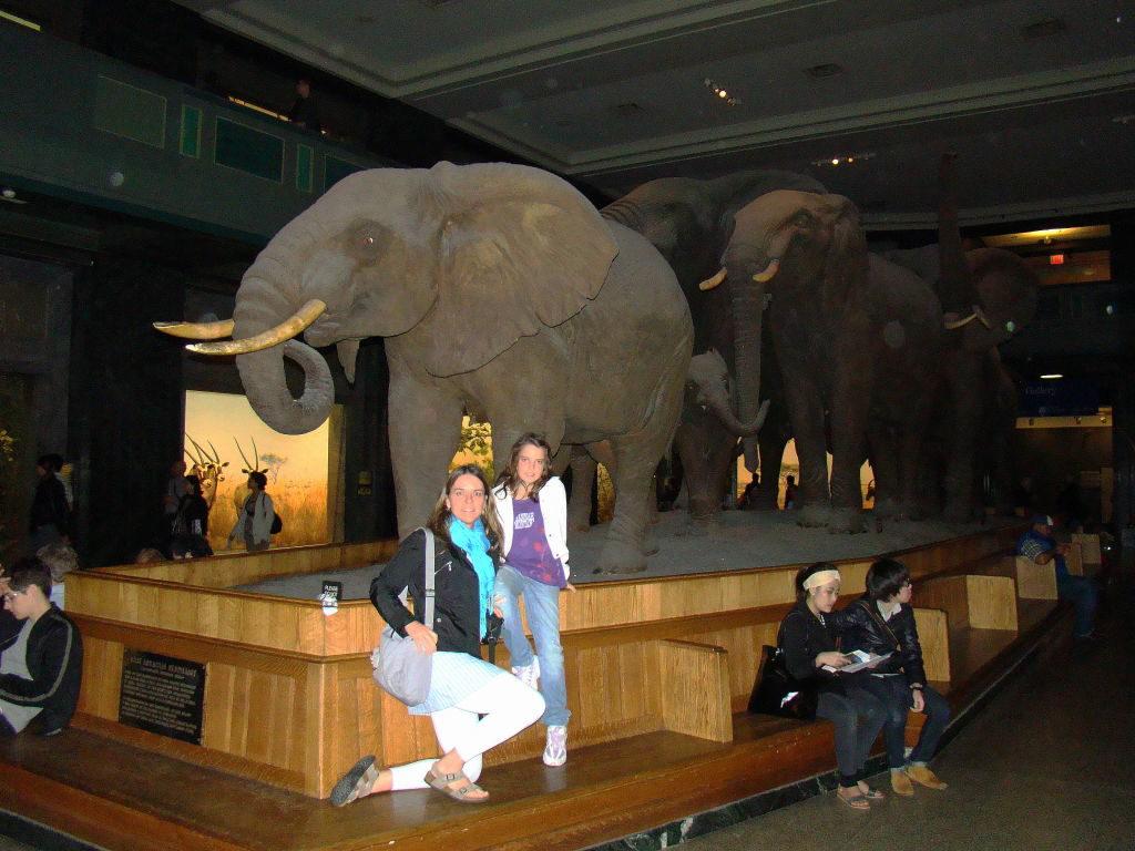 Museu de História Natural - Principais Pontos Turísticos de Nova York
